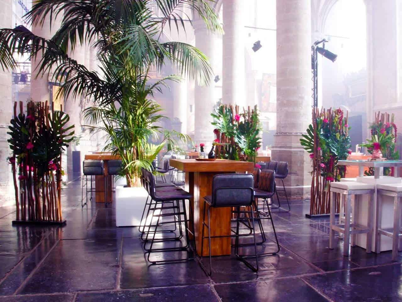 Palm huren? Kentia palmen voor de aankleding van je evenement