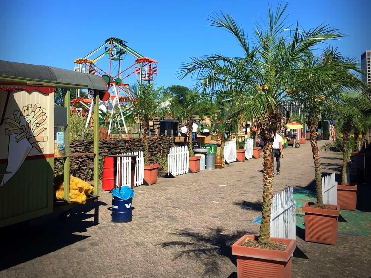 Palm huren? Kokosnotenpalm Phoenix Roebelenii op uw festival of evenement