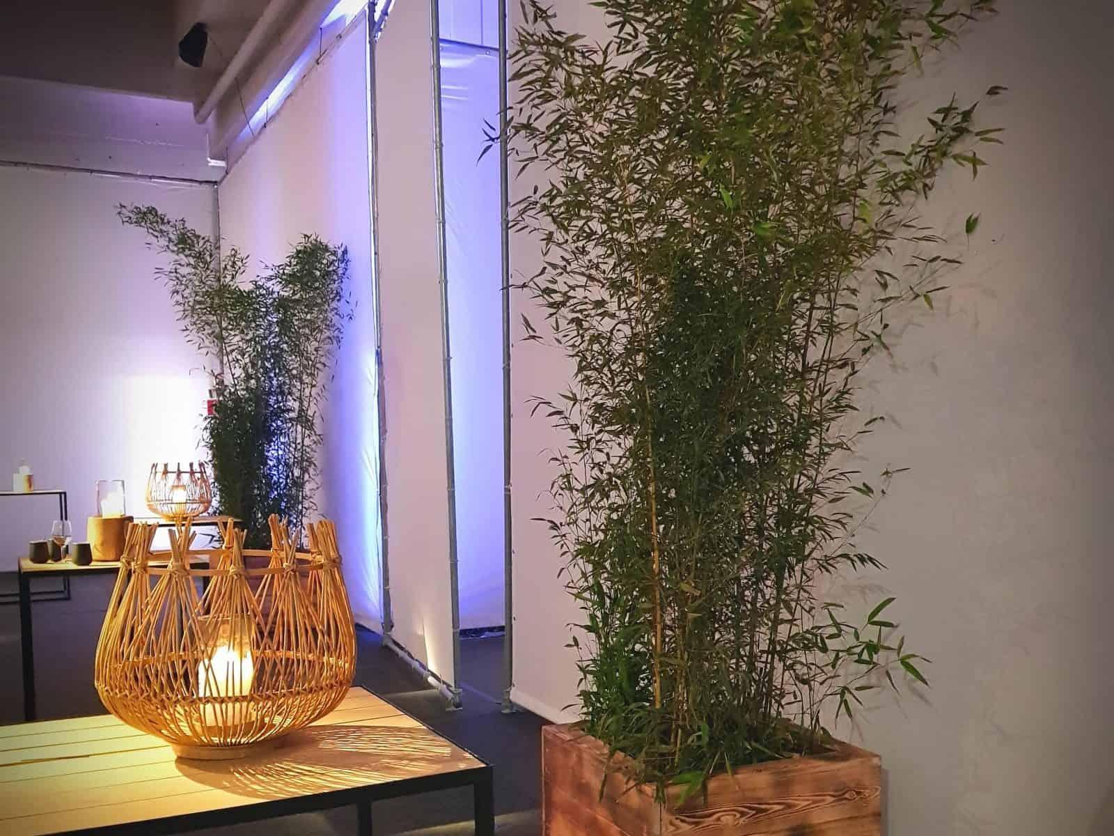 Bamboe planten huren? Mooie bamboe voor uw festival of evenement!