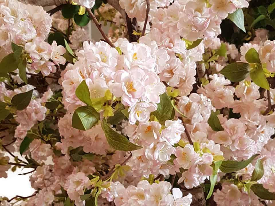 Bloesemboom huren? Bloeiende boom voor een Aziatische sfeer